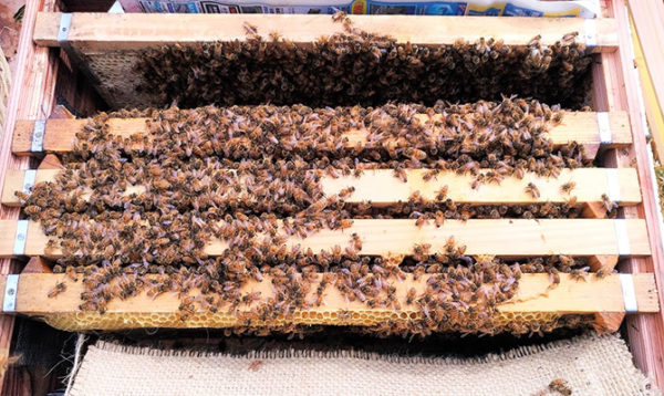 種蜂5枚群