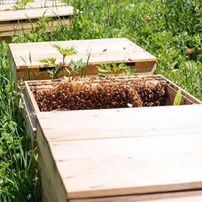 ミツバチと巣箱