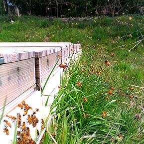 巣箱とミツバチ