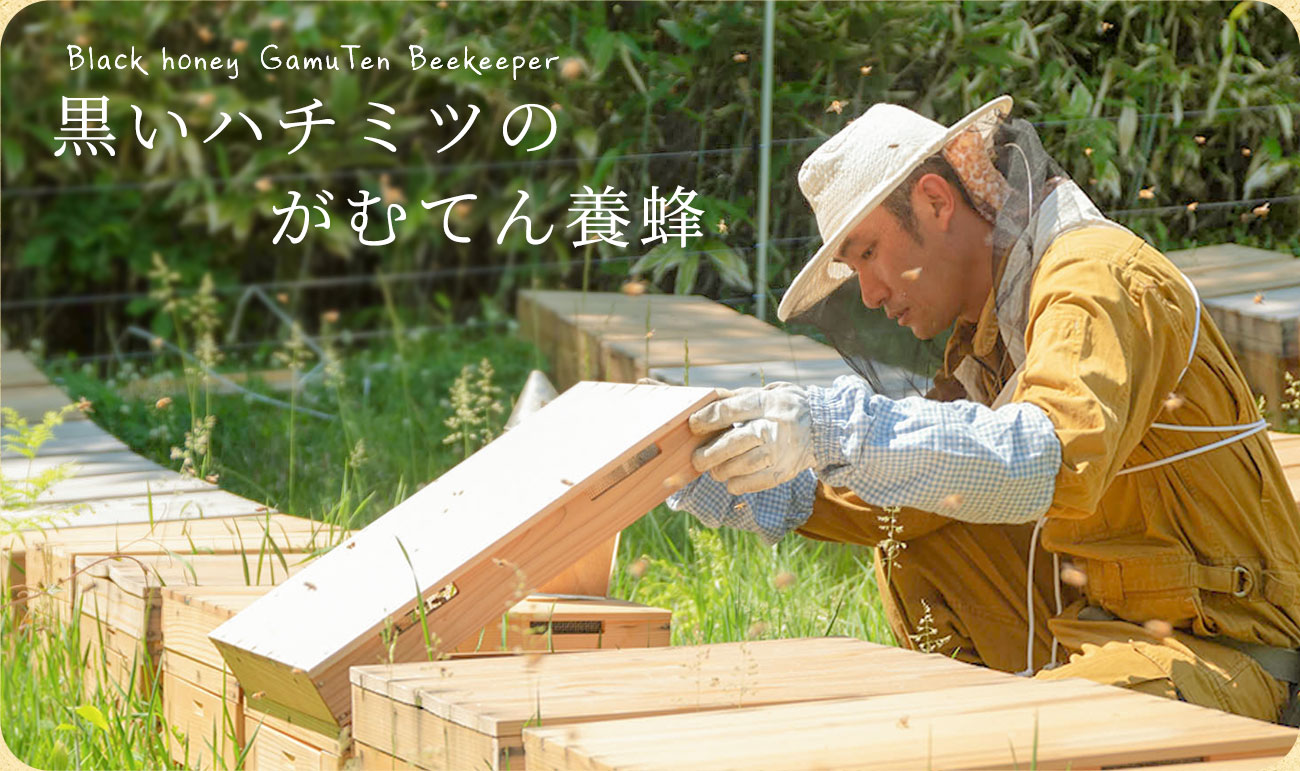 がむてん養蜂